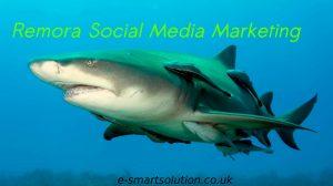 Remora Social Media Marketing
